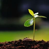 La hierba crece sola