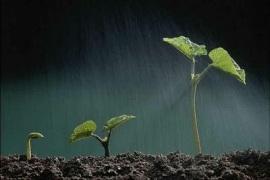 plantas_germinando