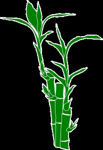 tai chi conciencia bambu